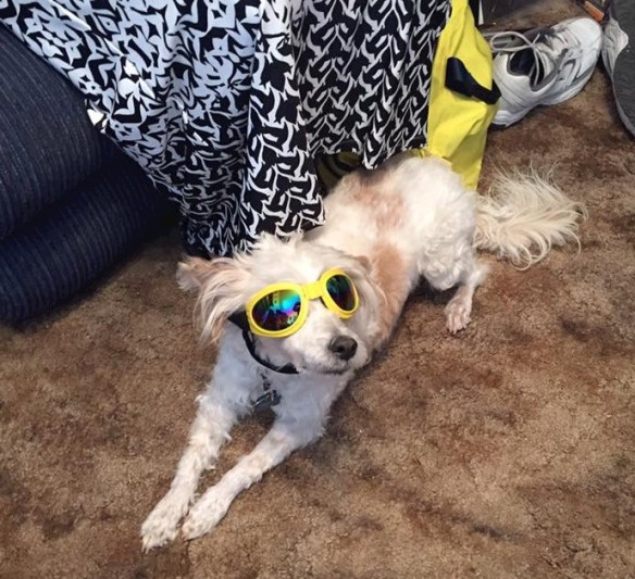 9/14/16 Yep, the puperazzi have been hounding me quite a bit, so a bit of disguise will help my notoriety... although as Trump would say all press is good press... Freddy Ginng