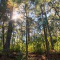 Toma un Baño Forestal - Absorbe el bosque con todos tus sentidos