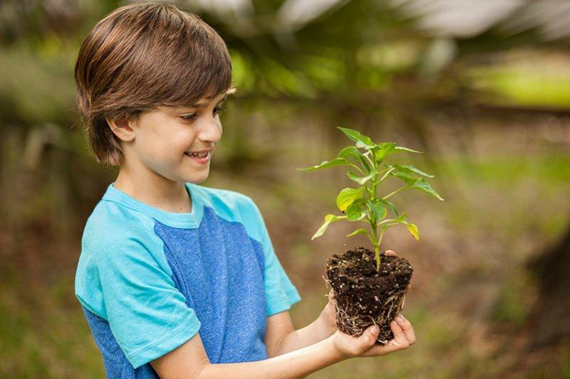 Planta un Árbol