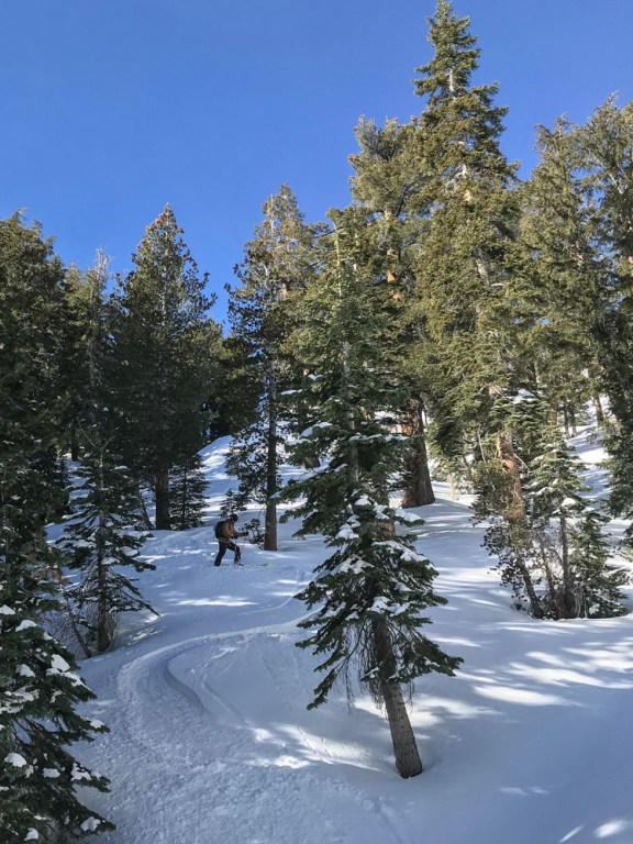 Mammoth Mountain area bc, late Jan 2018
