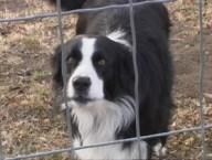 lady_the_dog
