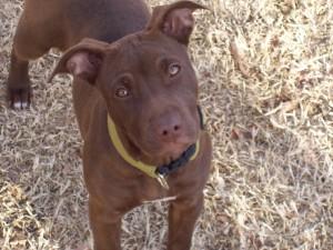 dog_adoption_day