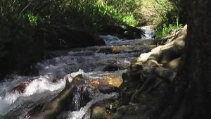 monroe-stream