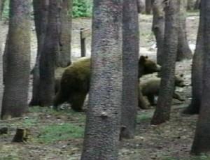 bears-3.jpg