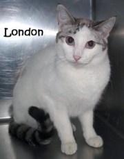 cat_london