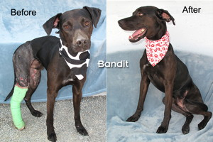 14-07-16 BANDIT BEFORE & AFTER Black Lab mix male 18 mo ID14-04-010 - COLOR NEWSPAPER