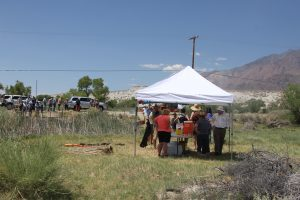 The start of the tour of the proposed Owens River Trail at what would be the intake off Narrow Gauge Road north of Lone Pine. The group was greeted by lemonade, brownies and examples of the tules laying dead on the bank.