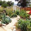 7/15/14  Edible Landscape