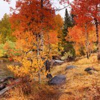 N. Fork Bishop Creek