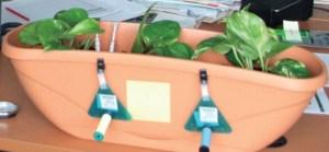 La biosurveillance végétale et fongique de la qualité de l'air est complémentaire de la surveillance physico-chimique. Exemple d'une étude menée dans un environnement intérieur.