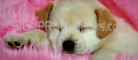 14-004 Dog Background 192×440