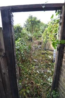 CAT - Green Wrythe Lane