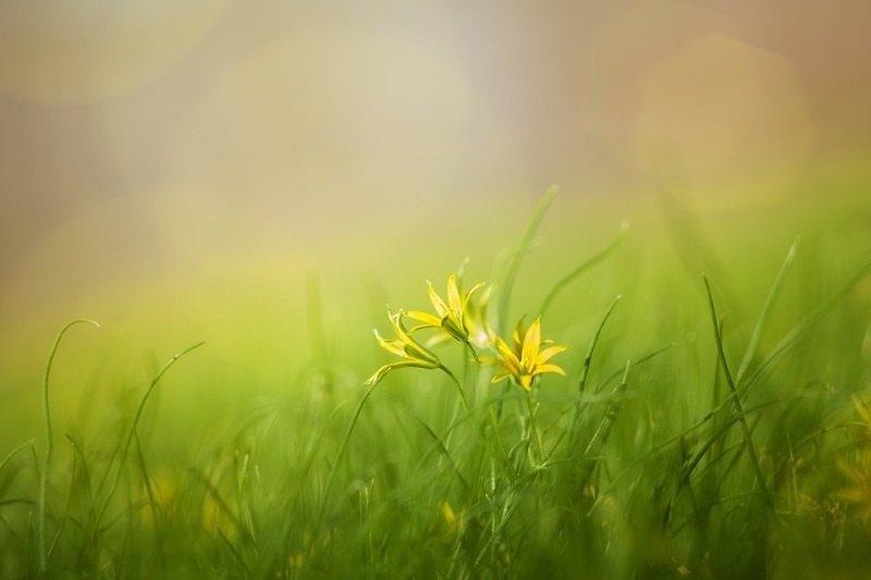 El color amarillo en la Biblia representa la Gracia y la Gloria de Dios