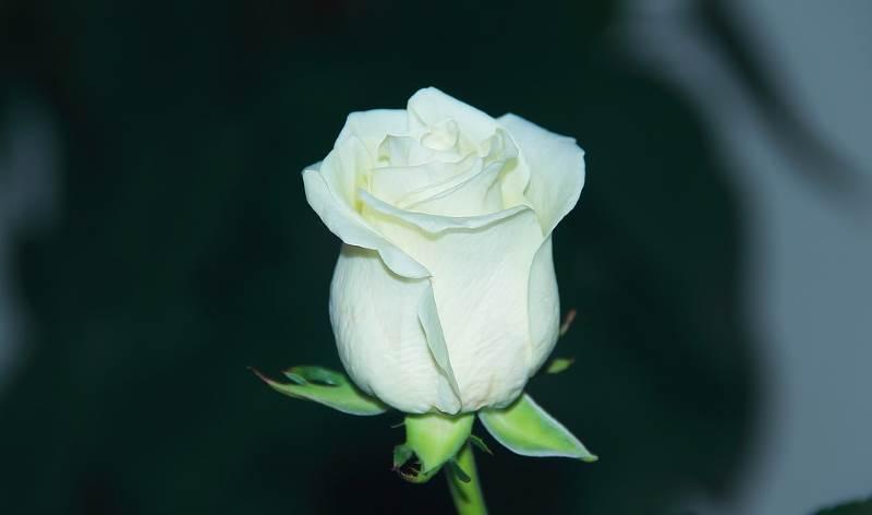 El significado del color blanco más conocido es el de pureza