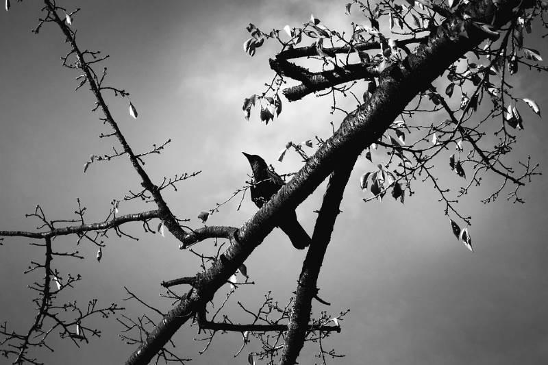 Un importante significado del color gris es el de viejo