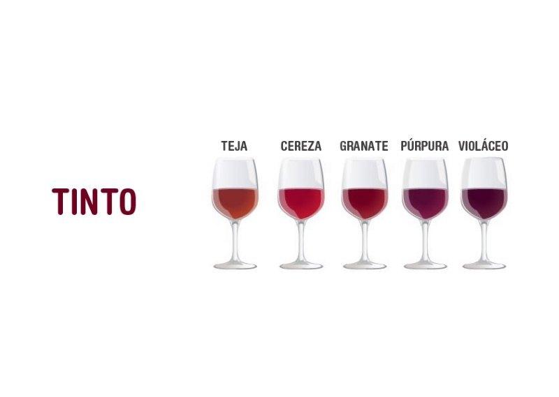Colores del Vino Tinto ▷【Variedades de COLOR del VINO】