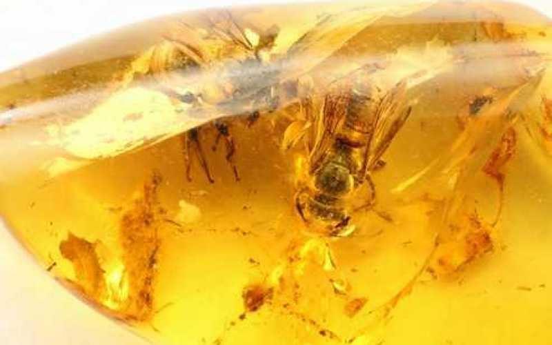ejemplo de ambar con abejas en su interior
