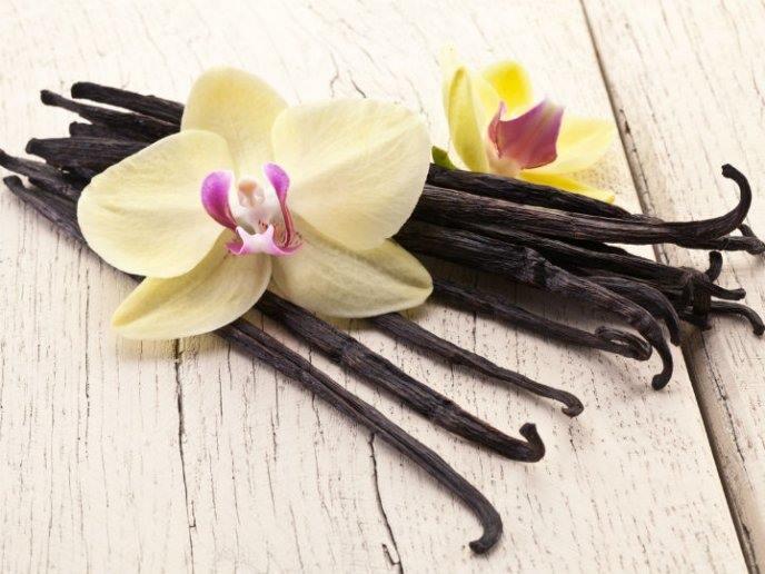 flor de la vainilla