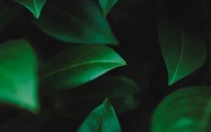ejemplo de tonalidad verde oscuro