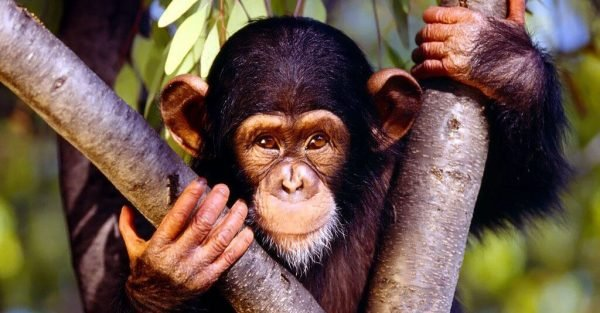▷ Sonhar com Macaco -【IMPERDÍVEL】