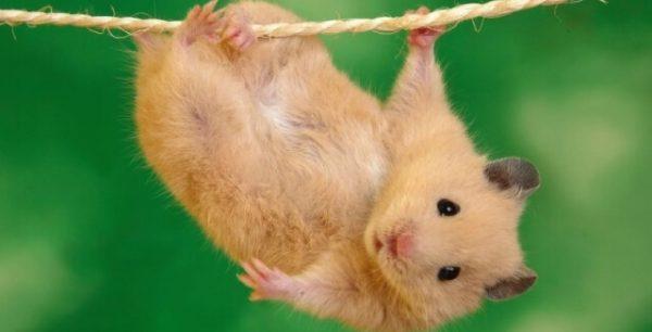 ▷ Sonhar com Rato -【Interpretações Reveladoras】