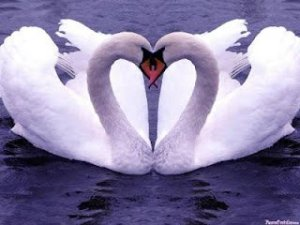 ▷ Simpatias Para o Amor【INFALÍVEL】