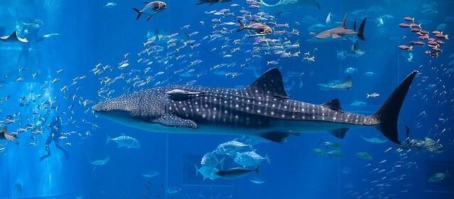 baleia comendo peixe