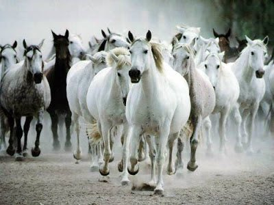 ▷ O que significa Sonhar com Cavalo【Interpretações Reveladoras】