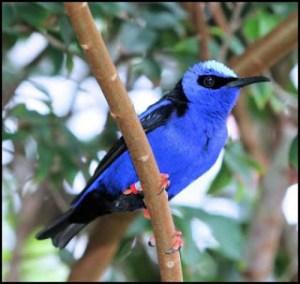 ▷ Sonhar com passarinho【IMPERDÍVEL】