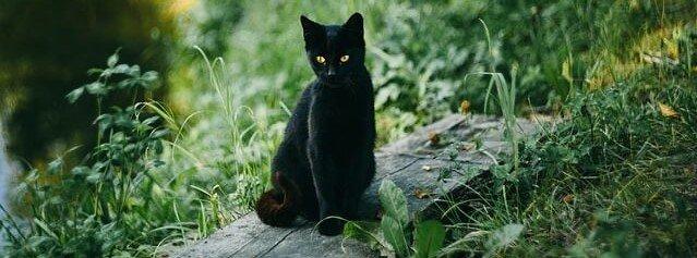 gato preto é má sorte?