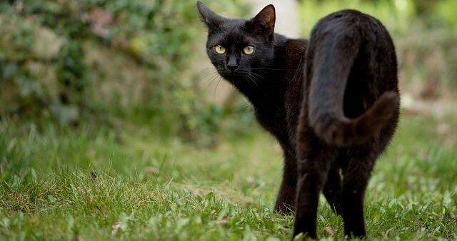 gato me olhando