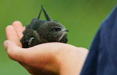 ▷ Sonhar com Pássaro na Mão【Interpretações Reveladoras】