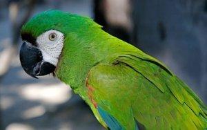▷ Sonhar com Papagaio Verde【IMPERDÍVEL】