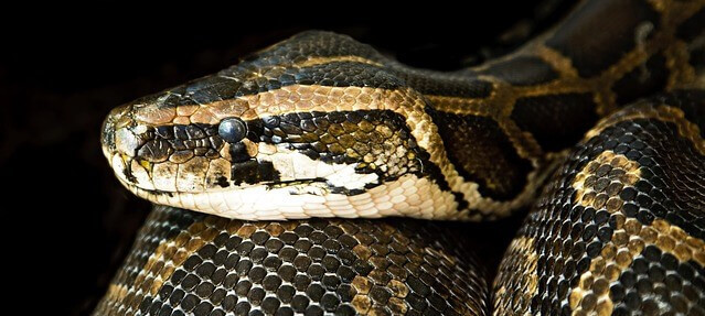 sonhar com muitas cobras no quarto