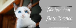 ▷ Sonhar com Gato Branco -【IMPERDÍVEL】