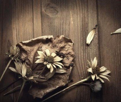 flores secas