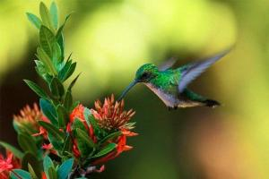Quando Você Vê Um Beija-flor, Uma Alma Amada Veio Te Visitar…
