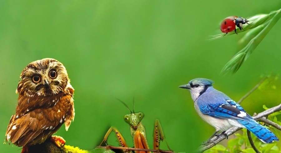 Se algum desses animais aparecer com muita frequência em sua vida, é uma mensagem celestial