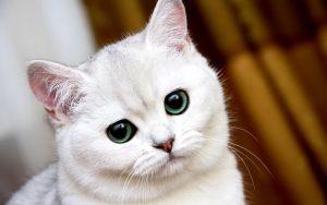 5 Poderes Mágicos Que Os Gatos Têm Que Você Provavelmente Não Sabia