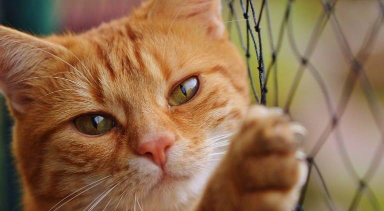 10 lições de vida e amor que você pode aprender com seu gato
