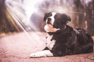 ▷ Sonhar Com Cachorro Que Já Morreu 【10 Significados Reveladores】