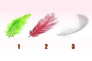 Escolha uma pena de anjo e receba um conselho valioso
