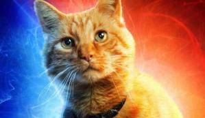 Seu gato é vidente? Depois de ler isso você vai ver seu gato com outros olhos