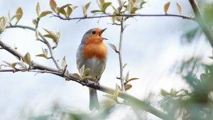 ▷ Sonhar Com Pássaros Cantando 【É Sorte?】