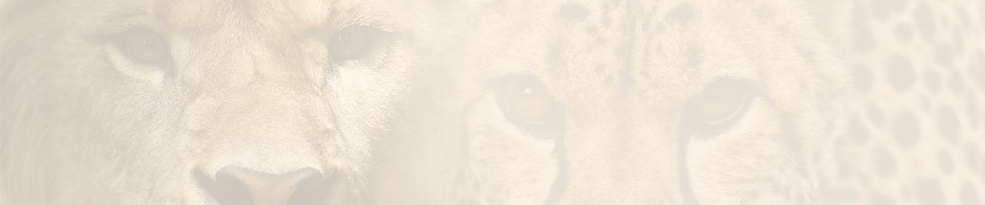 fondo Reino Animal