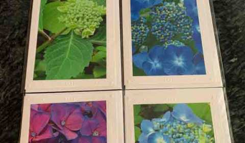 Janet Hurd, photo cards