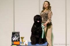 Veteran BIS, Black Terrier