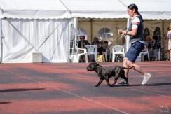 "International Dog Show ""Estonian Winner 2016"" in Tallinn"