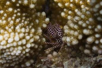 krabbe 1-2636