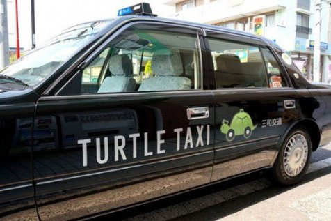 turtle taxi 1